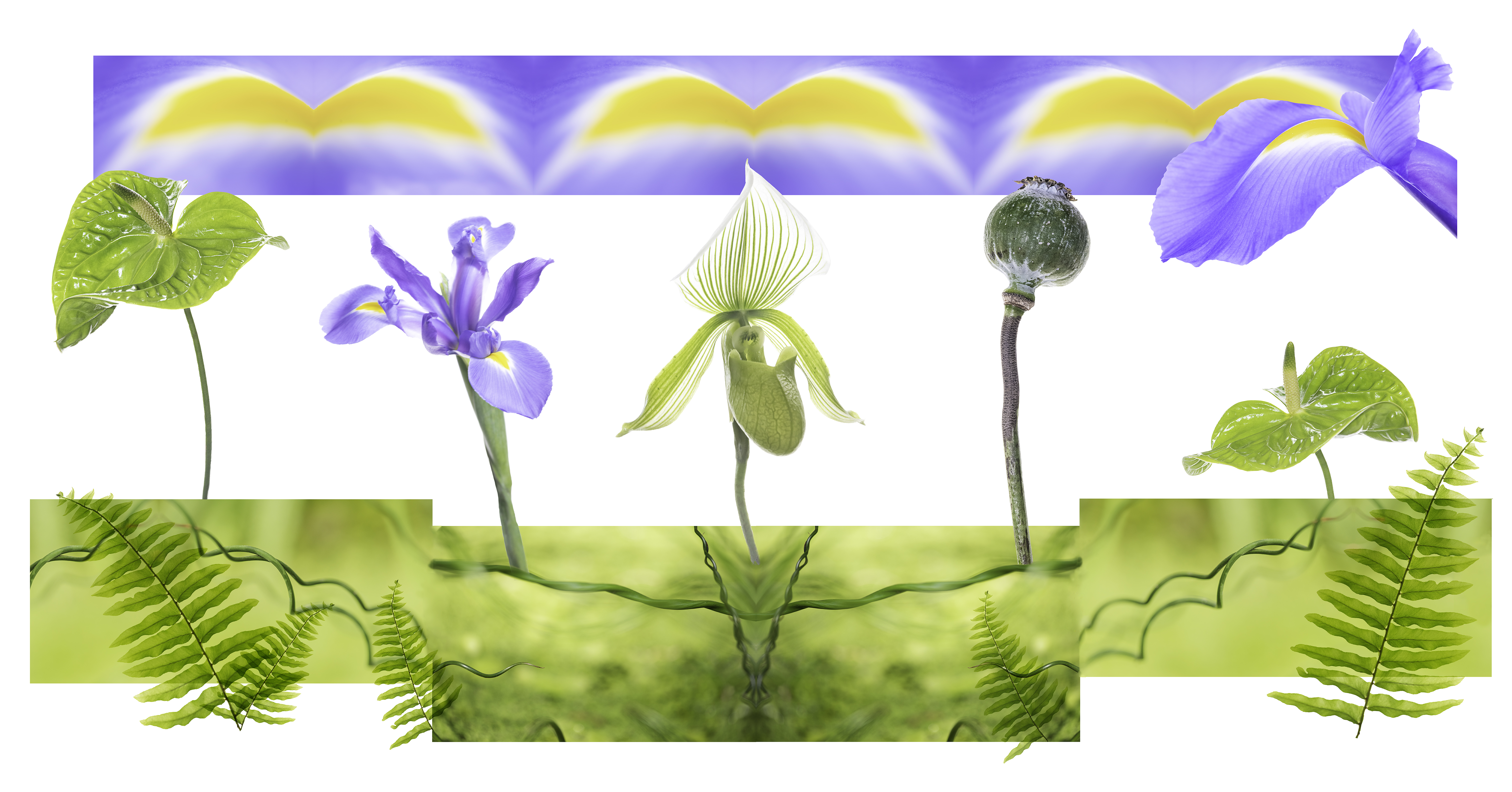 BotanicalExploration