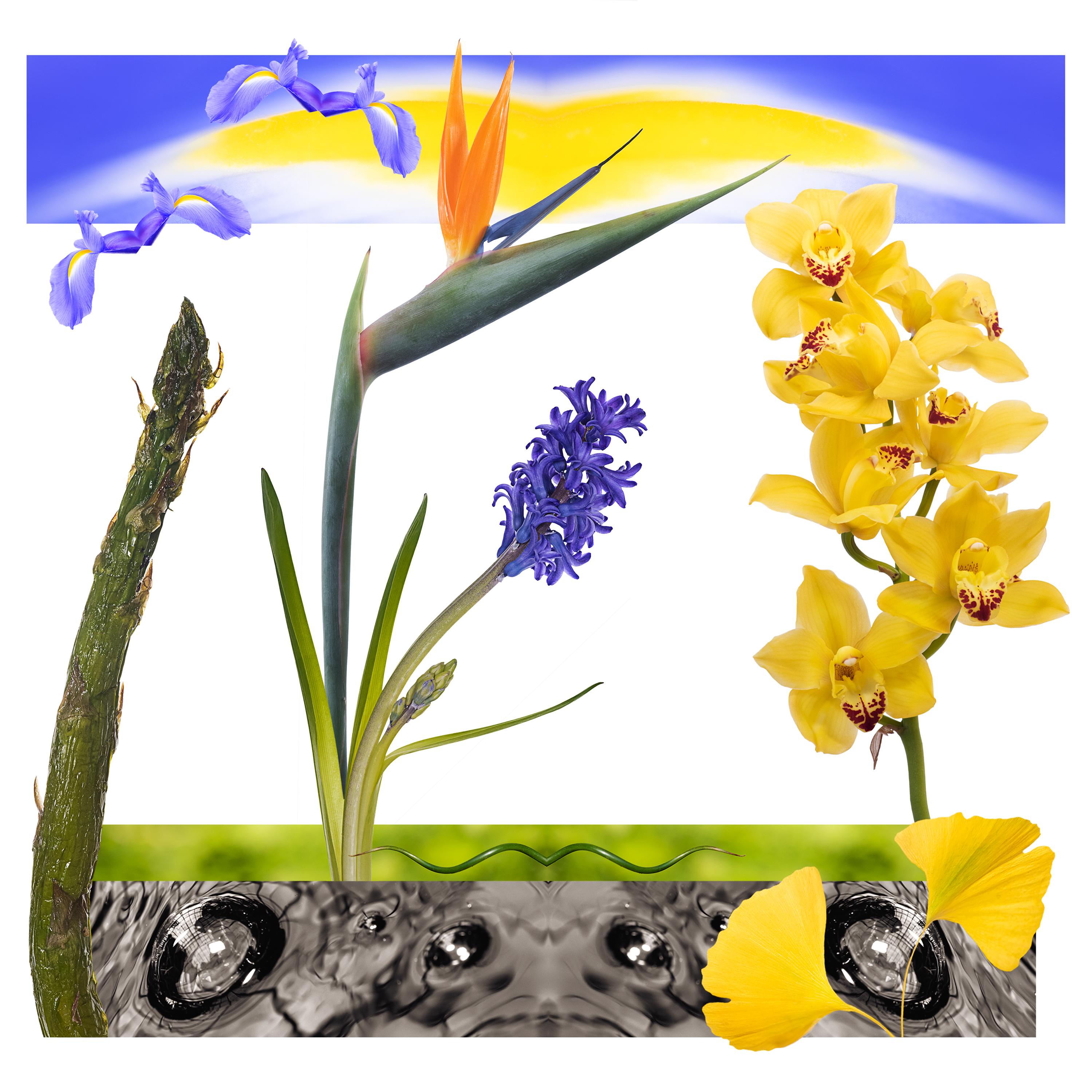 BotanicalElements